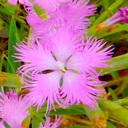 ネイチャーエンジニア 植物ブログ
