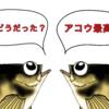 人生初アコウ!&竜示のライトルアーフィッシングちゃんねるに出演! 景色も最高な福井遠征釣行!!