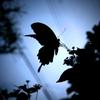 猛暑に蝶々
