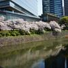 桜の白金台と赤坂見附を散歩