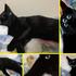 【ハロウィン】猫の目を増やしてメイクっぽく飾りつけしてみたら小一時間は楽しめた。