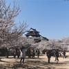 松山城の桜
