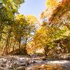 その秋は色はビルに吸い込まれている