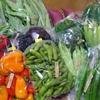 念願のお取り寄せ!幸せ色の伝承野菜たち(山形・真室川町)