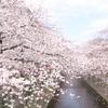 目黒川の桜をルミックスDMC-GM1で撮影♪