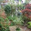 静かな雨の庭