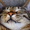 猫は睡眠中にブルブルと痙攣することがある