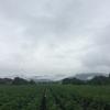 重低音の雨