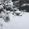 今シーズン初めての雪