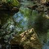 天然記念物であるオオサンショウウオが生息しているらしい場所