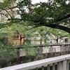 緑が多い江戸川橋