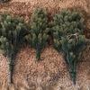 もはや本物以上に本物っぽい【RS GLOBAL TRADE社のクリスマスツリー】は片付けも簡単・コンパクトで優秀だった!