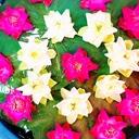バンコク愛のブログ