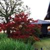 京都 東寺の紅葉の様子