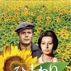 極上の映画音楽とともに楽しむイタリアの切ない愛の物語『ひまわり』-ジェムとおかんと、時々おとんのおすすめ映画シリーズ