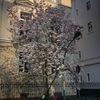 ドイツの春