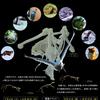 富良野盆地の動物たち