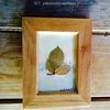 カードサイズの葉っぱのアート