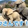 ゾウさんです!!
