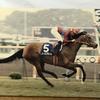 『競馬パネル:ノースフライト「1994年:第44回安田記念」』