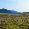 アサリの養殖から見えた生物多様性喪失の問題点