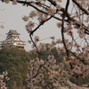 岐阜県観光大使の桜情報~実家から近い。国宝×大河×桜~