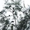 鳥の実る木