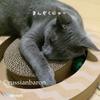【子猫との過ごし方】もらって嬉しかった猫のおもちゃーニャンコロビー