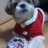 【今日のくーちゃん】メリークリスマス♪