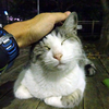 さよなら…夜明けランロードの猫