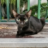 タイ猫の写真と、最近のタイのニュース。ぼくの感想も書こうかなぁ。