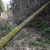 行く手を塞ぐ倒木の美学