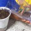 【1歳3歳育児】植物を育てよう【夏休み20日目】