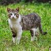 猫好きのかたは観てください ◆ 「密着!ネコたちの1週間」