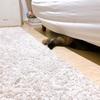 お古のソファーと猫さんの意思表示。