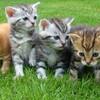 【猫の多頭飼い】猫ちゃん達と快適に暮らすために気を付けるべき5個のポイントについて