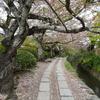 哲学の道へさくらを見に行ってきました(京都)...20190417