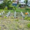 庭に小屋を作ってみた その7 2015.6.15