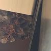 浜松市でウッドデッキの下にできた蜂の巣を駆除してきました