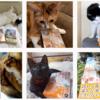 皆さんの猫さん写真と本の画像をInstagramに投稿しています!! 2020年12月13日までの掲載分