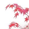 師走の植物たち 京都産まれの紅葉と多肉たち