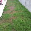 クラピアを植えて10ヶ月半…ぐんぐん伸びてきた