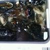 貝類は鉄板♪!