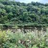 後谷の池(仮称)(新潟県上越)