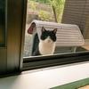 野良猫観察記②