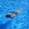 冬場の水泳!効果について