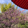 【鎌倉いいね】3月1日の鎌倉長谷さんぽで春を感じる。