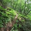 ◆2018/05/12      新緑の温海嶽⑤…旧拝殿コース・杉とシダの林を下る。