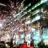 東京夜昼散歩していたら満開のジュウガツザクラを発見しました♪