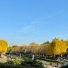 冬に向かう昭和記念公園